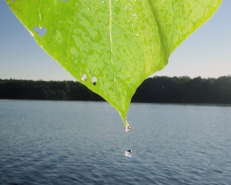 Photo: Lake DeForest, Rockland County.  Credit: Laurie Seeman.  Source: Lamont-Doherty Earth Observatory.