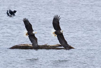 _eagles 4a