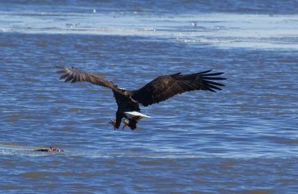 _eagles 5a