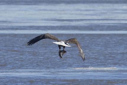 eagles 6a-