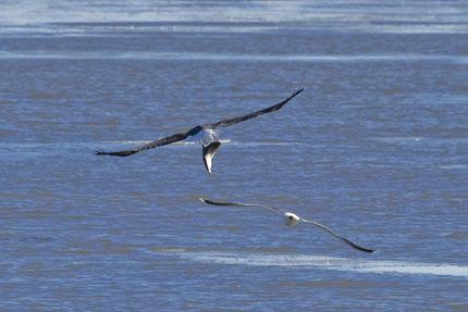 eagles 7a-