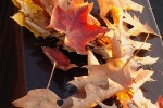 Leaves201410